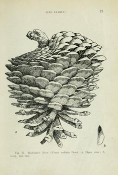 The trees of California. - Biodiversity Heritage Library