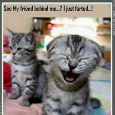 Cat Just Farted cute animals cat cats adorable animal kittens pets kitten funny quotes funny pictures funny animals funny cats funny jokes Funny Animal Quotes, Funny Animal Pictures, Cute Funny Animals, Animal Memes, Funny Cute, That's Hilarious, Funny Photos, Animal Pics, Cat Quotes