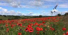 Natural Bouquet, Fields, Poppies, Nature, Outdoor, Outdoors, Naturaleza, Outdoor Games, Poppy