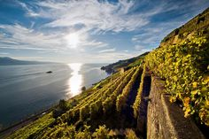 One of the most beautiful landscapes in Switzerland, Lavaux is also an AOC wine region and a UNESCO heritage site. Lake Geneva, Resort Spa, Switzerland, Vineyard, Cruise, Castle, River, Landscape, World