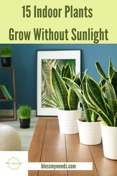 If you love plants but don't have a sunroom, or just dont get a lot of natural light in your house, growing plants can be a challenge. Since I love a little green in my home, I want to put plants wherever I can. But, if they didnt get light, they died. That was until I learned about 15 magical plants that grow without much sunlight. Maybe you would like to have these as well. For more info and a list of these plants, keep reading.  #houseplants #plantsthatdontneedsunlight #indoorplants Living Room Plants, Room With Plants, Bedroom Plants, Little Plants, Small Plants, Cool Plants, Window Plants, Hanging Plants, Backyard Plants