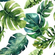 Monstera leaf custom throw blanket green monstera palm kids blanket tropical palm organic cotton and minky choose your size and color minky – Healty Watercolor Pattern, Watercolor Art, Wal Art, Hawaiian Party Decorations, Kids Blankets, Throw Blankets, Painted Leaves, Tropical Leaves, Canvas Paintings