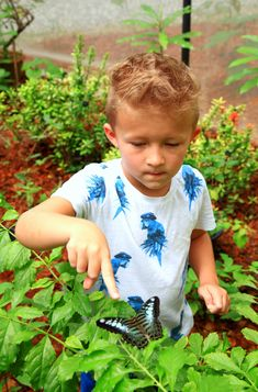 Tours of the Merlin Butterfly Sanctuary are available every Monday, Wednesday and Fridays at am. Children and adults can learn about the butterfly life-cycle and see many species. Family Friendly Resorts, Butterfly Life Cycle, Phuket, Resort Spa, Merlin, Wednesday, Tours, Learning, Children
