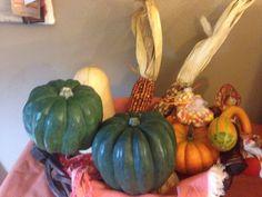 Squash & Corn Thanksgiving Display