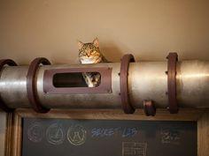 EDRA | Steampunk Cat Transit System Shuttles Kitties across Mad ...