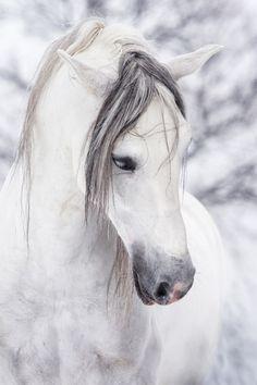 Horses have around 205 bones in their skeleton.