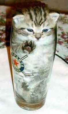 """""""ok, get me out of this cup please"""""""