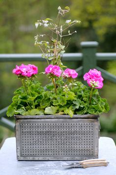Vibrant pink. The Balcony Gardener on http://designsponge.com | Photo by Keiko Oikawa