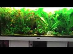 bildresultat för juwel aquarium layout | aquarium | pinterest ... - Decorazioni Juwel