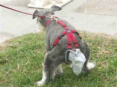 The pooptrap is a bag and harness that attaches to your dog's behind to catch any falling... uh... debris.  http://www.ivillage.com/weird-pet-products/7-a-534326