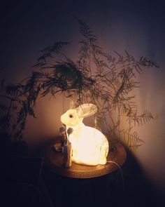 Notre lapin doux.  #lapin #lampelapin #doux #rabbit