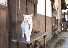 Twitter / nekozamuraiinfo: 【ドラマ版脚本:黒木久勝】「猫と侍で日本を元気に!」これぞネコノミクス!かわいいニャンコを巡る愛と笑いとちょっぴり涙の物語で不景気なんかぶっ飛ばせ!#猫侍 Neko, Domestic Cat, Adorable Animals, Funny Cats, Cats And Kittens, Funny Kitties, Cute Cats, Cute Animals