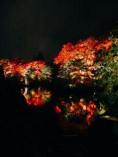 Night Fall Foliage of Nikko Rinnoji Temple Syoyoen. Nikko, Wonderful Picture, Travel Photos, Temple, Christmas Tree, Tours, Holiday Decor, Fall, Pictures