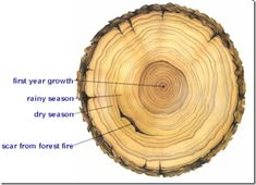 testimonies and tree rings - although I couldn't find the exact article, this blog is very nice.