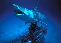 Jaws: The Revenge (1987) - Photo Gallery - IMDb