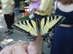 Birmingham Botanical Gardens will present Butterfly Education and Awareness Day on June 13 from 10 a.m.-2 p.m. The family-friendly event is dedicated to the welfare of butterflies through conservation and research.