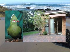 Sea Why - Sea Why is a self-catering apartment with private facilities and a separate entrance, situated in Nature's Valley. Sea Why is situated within an area of exceptional beauty, the Tsitsikamma, the largest . Weekend Getaways, Separate, South Africa, Catering, Entrance, Sea, Garden, Nature, Animals
