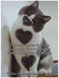 Cat Breeds, Animal Photography, Animal Kingdom, Koi, Funny Cats, Cute Animals, Pretty Animals, Cat, Nature Photography