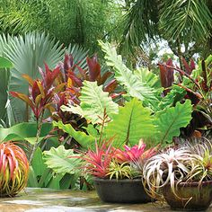 Lush container design for a tropical oasis. Design & Photograph: Davis Dalbok