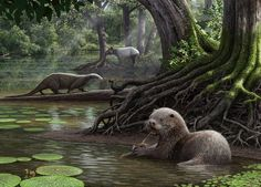 Prehistoric otters may have been of the size of a modern wolf, say scientists who have discovered million-year-old fossils of one of the largest otter species known to science.Remains of the large extinct otter, which had large, powerful jaws. Extinct Animals, Prehistoric Creatures, Ancient China, Fauna, Otters, Science Nature, Mammals, Wildlife, Otter