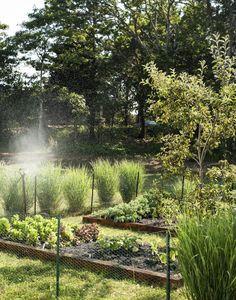 Beautiful Panicum (Switchgrass) outline this edible garden in Cape Cod, Massachusetts. Sheila Bonnell Orleans Cape Cod Kitchen Garden; Gardenista