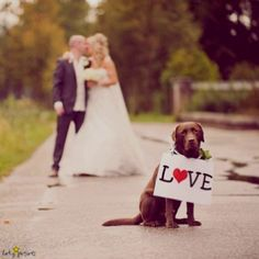 I want my dog involved somehow...prob engagement photos
