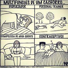 #amocachorro #amoanimais