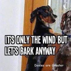 Dachshund humor.   #hotdogs #loldogs #barkbarkbark