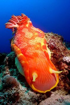 The spanish dancer. Photo by Alexandre Gries
