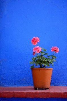 Frida Kahlo's house in Mexico City: La Casa Azul Deco Paris, Mexican Colors, Style Floral, Frida And Diego, Frida Art, Little Birdie, World Of Color, Blue Walls, Belle Photo