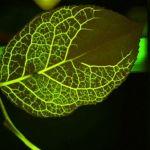 Biomimicry: Very Intelligent Design