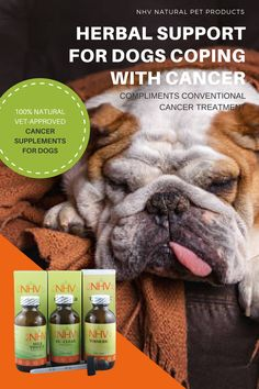Herbal support for dogs fighting cancer. NHV's cancer support kit for dogs has been around for twenty years and is completely natural. Read more about it and its reviews on our website - www.nhvnaturalpetproducts.com