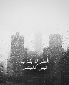 DesertRose...مطر