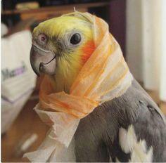Babooshka - little Russian lady Cute Little Animals, Little Birds, Cute Funny Animals, Funny Bird Pictures, Cute Pictures, Funny Birds, Cute Birds, Animal Hats, Pet Costumes