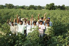In India Nearly 5.5 million farmers used our Nuziveedu seeds to get quality output and higher yields.