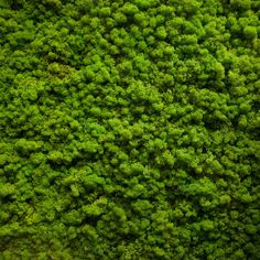 Moss texture by AlexZaitsev on Creative Market
