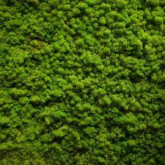 Moss texture by AlexZaitsev on Creative Market