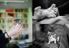 Radish kitten <3