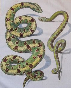 Antique Print 1783 Comte de Buffon 'Histoire Naturelle' Hand Colored Snakes