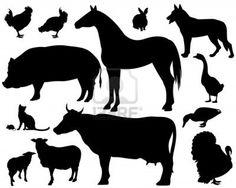 auf dem Bauernhof - Set aus feinem Tiere Silhouetten - schwarzen Konturen auf weißem Stockfoto - 16726709