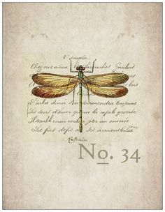 "notecards - ""scientific dragonfly"""