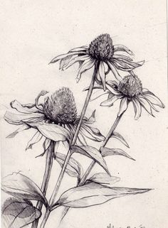 Flower Sketches, Drawing Sketches, Flower Sketch Pencil, Sketching, Flower Line Drawings, Pencil Drawings, Botanical Drawings, Botanical Art, Deviantart Drawings