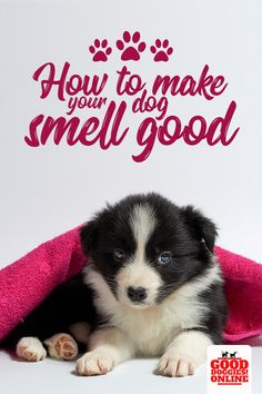 dog training,teach your dog,dog learning,dog tips,dog hacks Puppy Care, Dog Care, Smelly Dog, Living With Dogs, Dog Smells, Dog Insurance, Dog Hacks, Dog Grooming