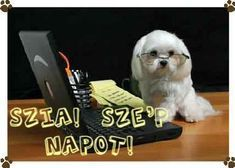 About Me Blog, Humor, Dogs, Animals, Animales, Animaux, Humour, Pet Dogs, Funny Photos