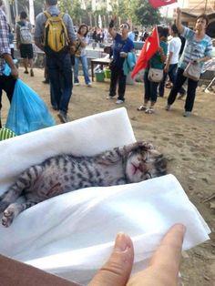 Gezi Parkı'nda doğdu, adı Çapulcu oldu:)