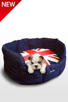 English bulldog on a Union Jack dog bed? C'mon!