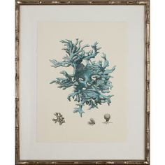 I pinned this Coral Framed Print I from the Cindy Rinfret event at Joss and Main!