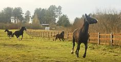 Horse meadow - Horses in the Hotel & Resort SPA Termy Medical WARMIA PARK in Poland (Warmia and Masuria, Pluski near Olsztyn)