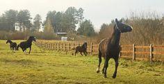 Horse meadow - Horses in the Hotel & Resort SPA Termy Medical WARMIA PARK in Poland (Warmia and Masuria, Pluski near Olsztyn)