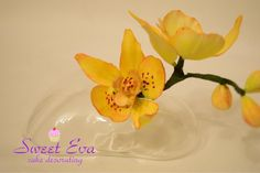 yellow orchid by ana ioan